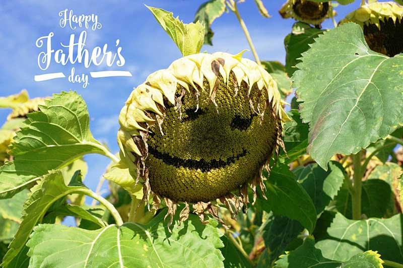 Happy Father's Day Image - Sad Sunflower