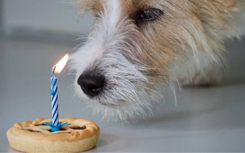 Happy 14th Birthday Images - 4