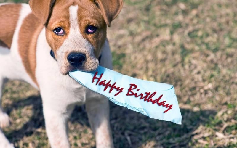 Happy Birthday Cheers Images - 26