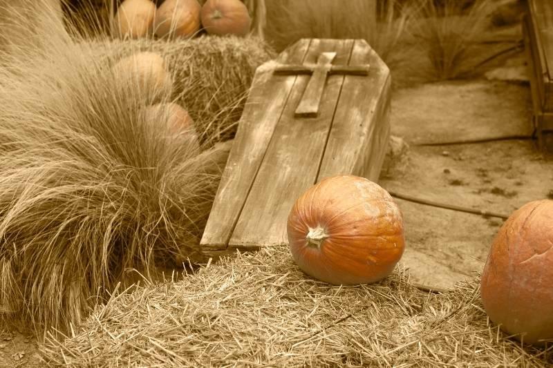 Happy Halloween Pictures - 24