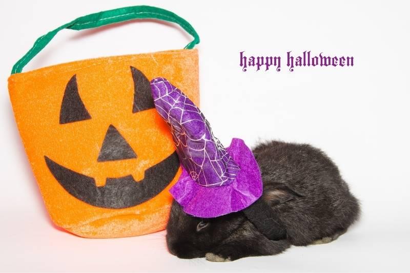 Happy Halloween Pictures - 4